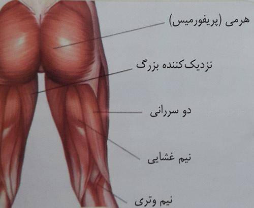 کشش عضلات نزدیک کننده ران