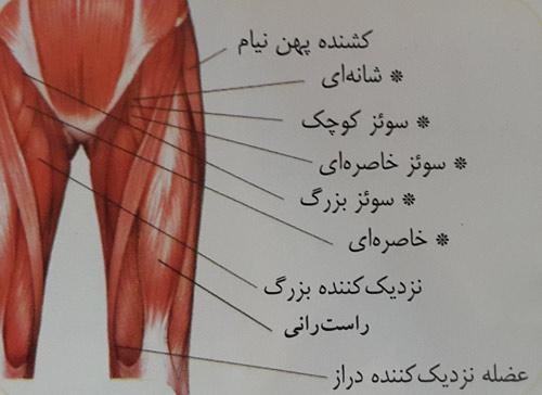 کشش عضلات لگن و ران