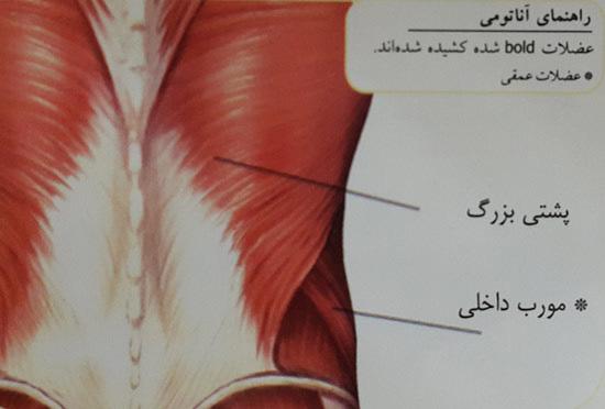 کشش عضله پشتی بزرگ
